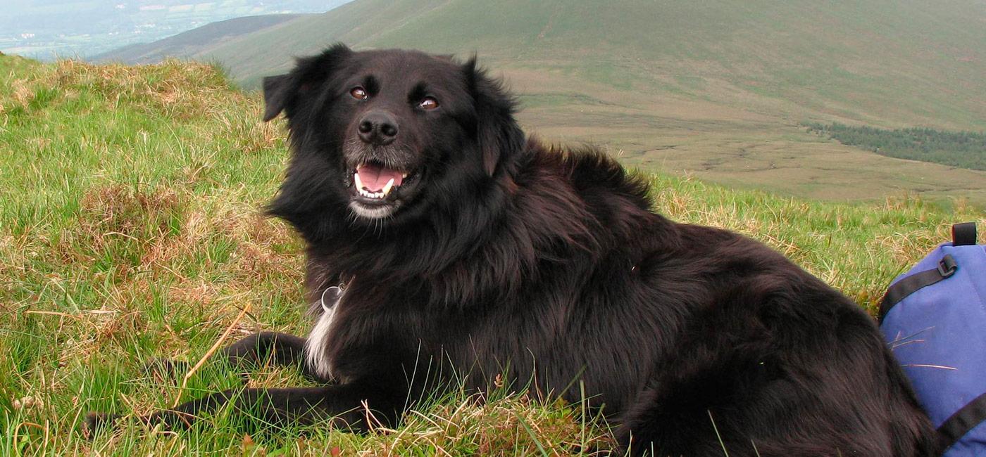 Bono the search dog