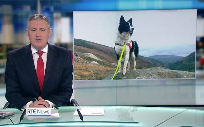SARDA Ireland featured on RTÉ News tonight